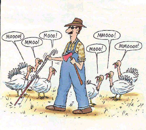 Life and Times of the Thanksgiving Turkey: He Never Saw It Coming turkey moo