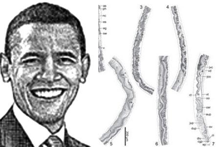 obama-parasite