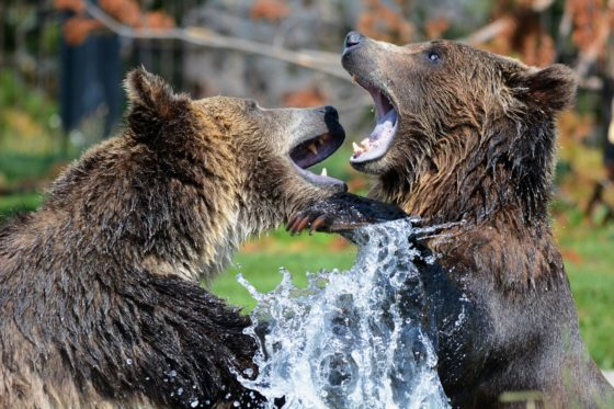 5 Signs That Global Financial Markets Are Entering A Bear Market, And 11 Ways That You Can Get Prepared For The Chaos That Is Coming…
