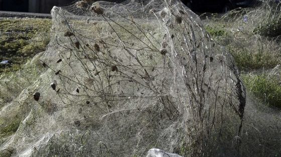 Spiders Coat The Shoreline Of Greek Town, Creating 1000-Foot Web
